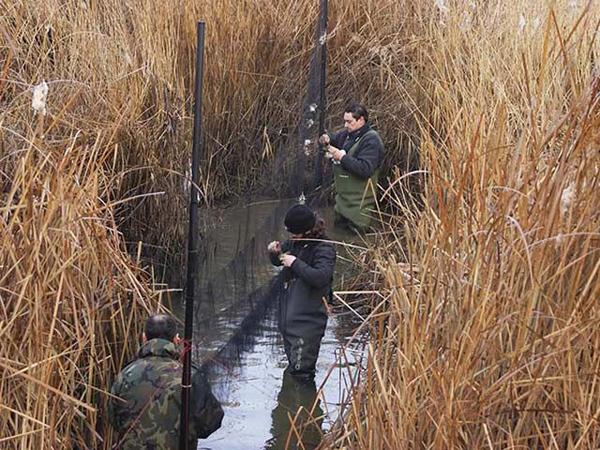 рыбалка ловля на сетку